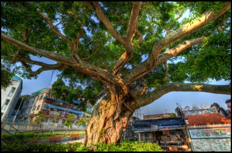 Photo Credit: The Old Chinese Banyan HDR, by Lip Jin Lee, Flickr