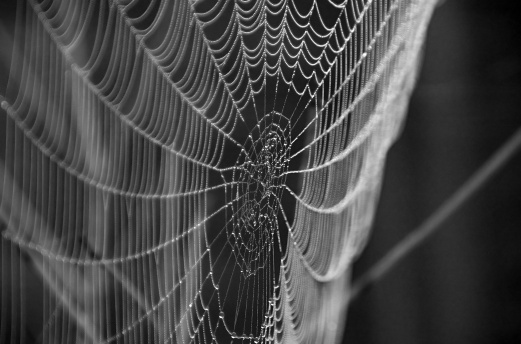 Web, david reid, Flickr